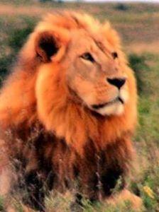 Narnia_aslan
